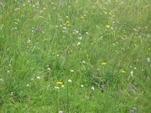 Colorful field of wild flowers Stock Photography