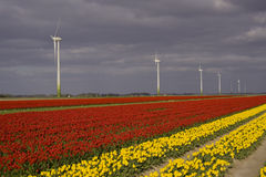 Colorful field and windturbine Stock Photo