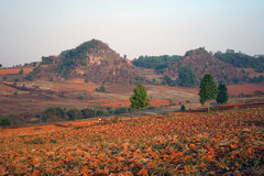 Colorful fields. Colorful ground in the fields of Myanmar royalty free stock photo