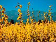 Colorful fields of Pai Royalty Free Stock Images