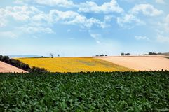Colorful fields Royalty Free Stock Image