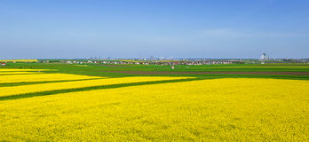 Colorful fields in spring Royalty Free Stock Image