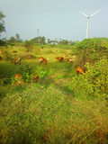 Colorful filming modern rustic idyll pastoral in India Wind farm Royalty Free Stock Photography
