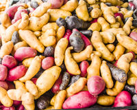 Colorful fingerling potatoes at the market Stock Photos