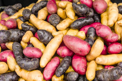 Colorful fingerling potatoes at the market Stock Photography