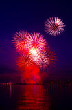 Colorful firework in a night sky Stock Photography