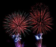 Colorful fireworks. Over black background royalty free stock photos
