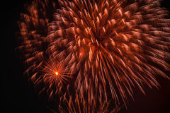 Colorful fireworks, as big peony with sparks. Explosive pyrotechnic devices for aesthetic and entertainment purposes Royalty Free Stock Photography