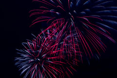 Colorful fireworks on the black sky background Royalty Free Stock Images