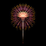 Colorful fireworks. Over dark sky background Royalty Free Stock Images