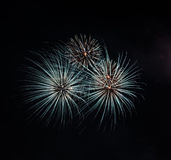 Colorful fireworks on sky Royalty Free Stock Images