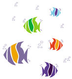 Colorful fish Stock Photo
