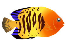 Colorful fish. Vector illustration of colorful tropical fish Stock Image