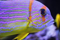 Colorful fish. In close up Stock Photography