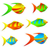 Colorful fish. Royalty Free Stock Images