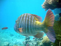 Colorful fish royalty free stock images