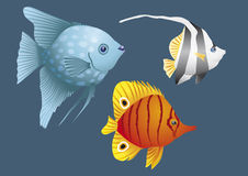 Colorful fish. Of coral reefs, fish, fishlet, water, aquarium, swim, sea, fingerlings, goldfish, animal, corals, marine life, ocean, fishbowl, endangered Royalty Free Stock Photo