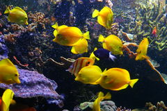 Colorful fish. Ocean aquerium showing brightly coloured fish royalty free stock image