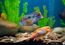Colorful fish aquarium royalty free stock photo