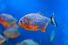 Colorful fish aquarium Royalty Free Stock Photo