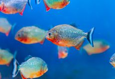 Colorful fish aquarium Stock Photo