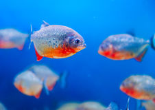 Colorful fish aquarium Stock Photos
