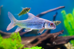 Colorful fish aquarium Stock Photography