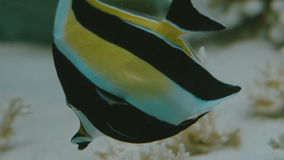 Colorful fish in an aquarium close-up stock footage