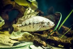 Colorful fish in aquarium. Colorful fish - Kolobrzeg aquarium tank Royalty Free Stock Photography