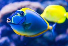 Colorful fish in aquarium royalty free stock images