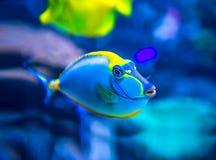 Colorful fish in aquarium stock image