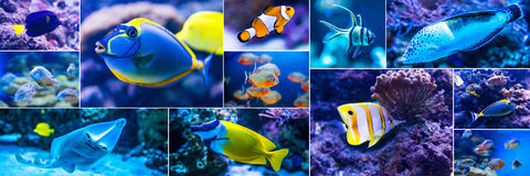 Colorful fish in aquarium saltwater world Royalty Free Stock Image