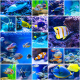 Colorful fish in aquarium saltwater world Stock Image