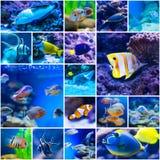 Colorful fish in aquarium saltwater world Stock Image