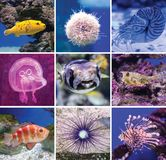 Colorful fish in aquarium saltwater world. A collage of different inhabitants of the sea depths, calm underwater landscapes, the concept of tranquility, beauty stock photos