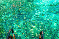 Colorful fish in azure water, Thailand stock images