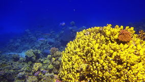 Colorful Fish On beautifull Coral Reef stock video footage