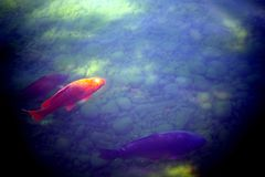 Colorful fish. In the castle pound stock photo