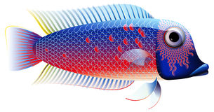 Colorful Fish, Chiclid. The fish was illustrated on Corel Draw royalty free illustration