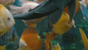 Colorful fish close-up stock video footage