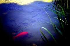 Colorful fish. In the castle pound stock photography