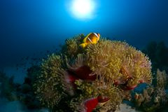 Colorful fish among coral reef. Beautiful colorful fish among coral reef Royalty Free Stock Image
