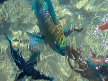 Colorful fish on a coral reef in the red sea through the water stock images