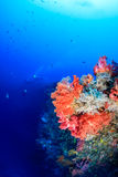 Colorful fish and corals on a deep reef with SCUBA divers behind Royalty Free Stock Photo
