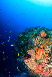 Colorful fish and corals on a deep reef Royalty Free Stock Image