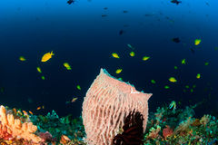 Colorful fish and corals on a deep reef Stock Images