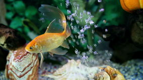 Colorful fish enjoying in the specially decorated aquarium. Health and Body care stock video