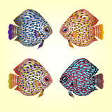 The colorful fish. The Four Elements. The colorful fish. Set Royalty Free Stock Photography