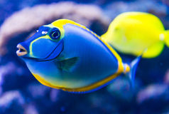 Colorful Fish In Aquarium Royalty Free Stock Images