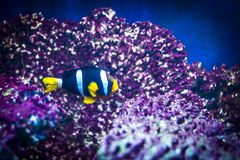 Colorful fish in aquarium. Colorful fish - Kolobrzeg aquarium tank Stock Photos